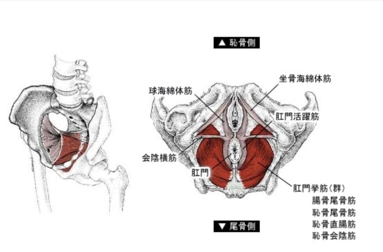 筋 の 低 方 骨盤 鍛え